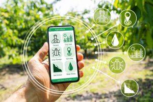 Smart Farming App auf Smartphone, im Hintergrund eine Plantagenfläche